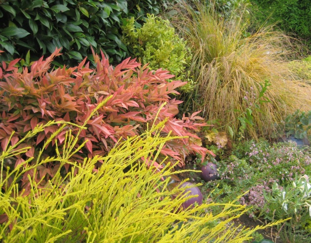 nandina coleonema sunset gold stipa