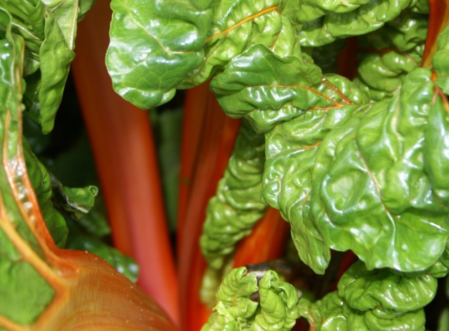 chard orange stems