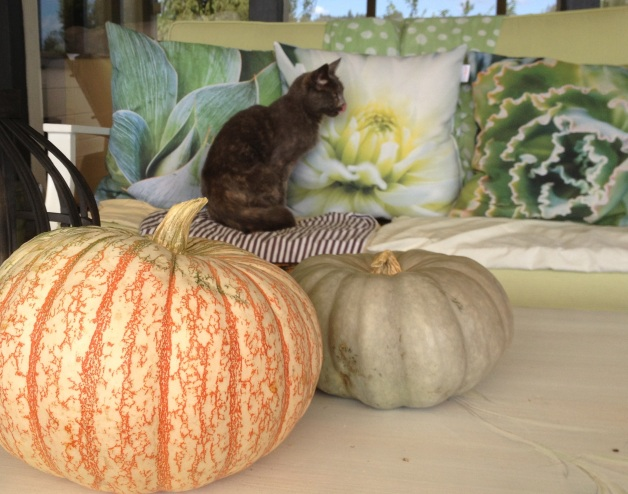 squash and pumpkin deco with cat