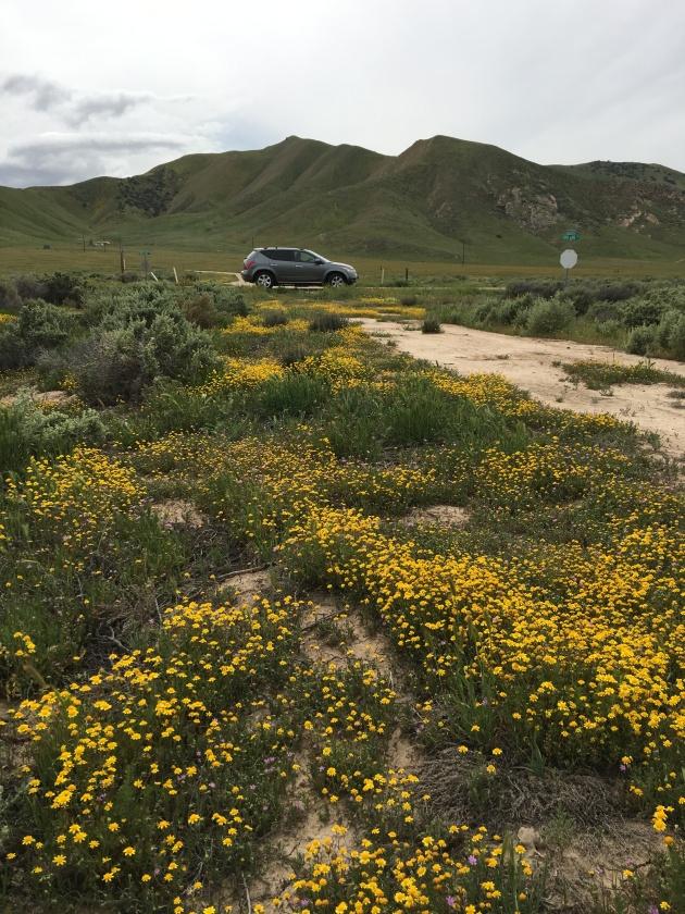 carizzo road trip