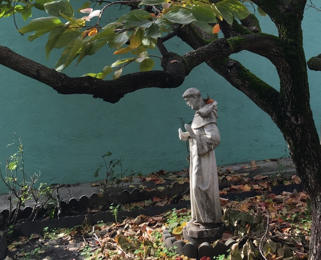st francis at dolores