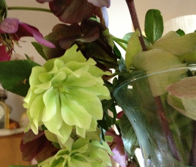 Double green Hellebore