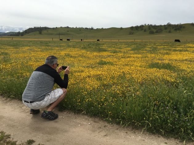 frank picture of wildflower goldfields